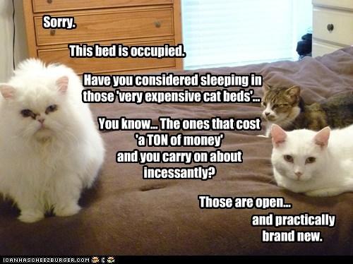 cat bed sleep funny - 7014316032
