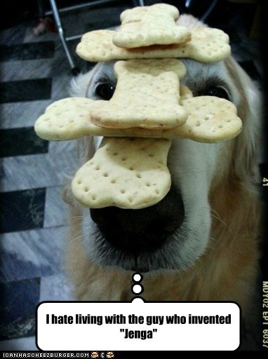 annoyed,dogs,treats,jenga,golden retrievers