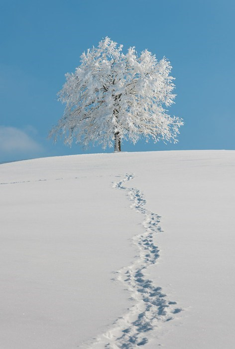 snow,trail,landscape,winter,hill