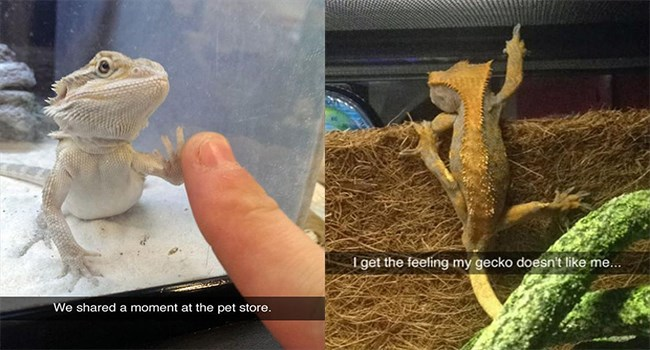 funny gecko snaps