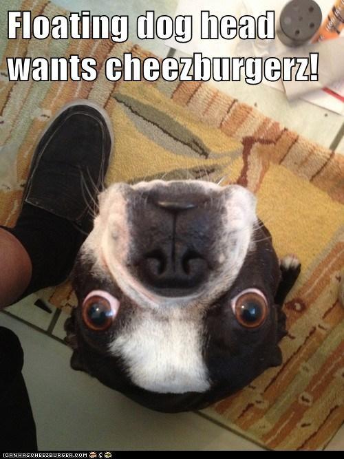 Cheezburger Image 7014789120