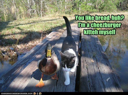 You like bread, huh? I'm a cheezburger kitteh myself