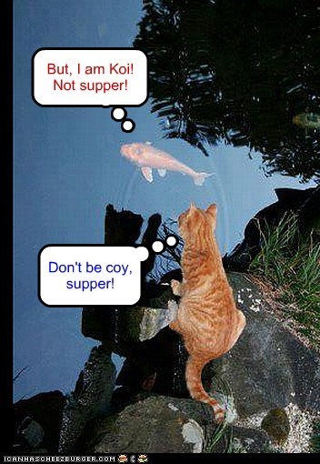 Don't be coy, supper! But, I am Koi! Not supper!