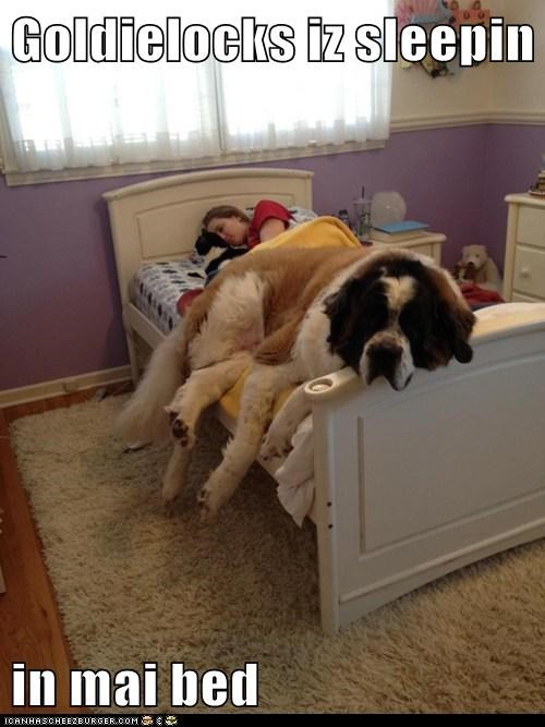 Goldielocks iz sleepin  in mai bed