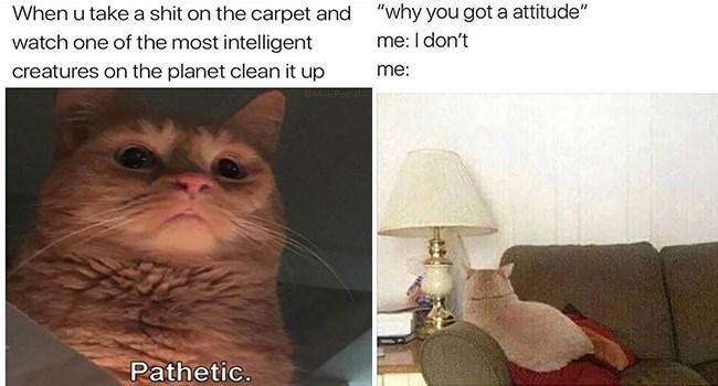 funny cat memes lolcats Memes lol Caturday funny cat memes - 7015173