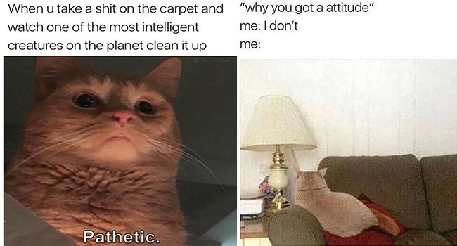 funny cat memes for caturday