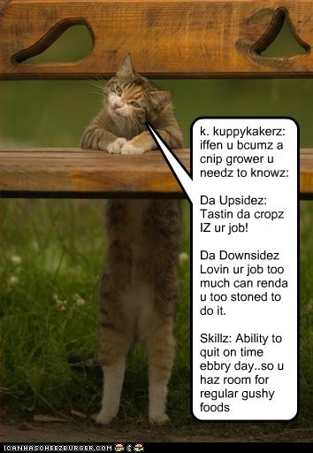 k. kuppykakerz: iffen u bcumz a cnip grower u needz to knowz: Da Upsidez: Tastin da cropz IZ ur job! Da Downsidez Lovin ur job too much can renda u too stoned to do it. Skillz: Ability to quit on time ebbry day..so u haz room for regular gushy foods