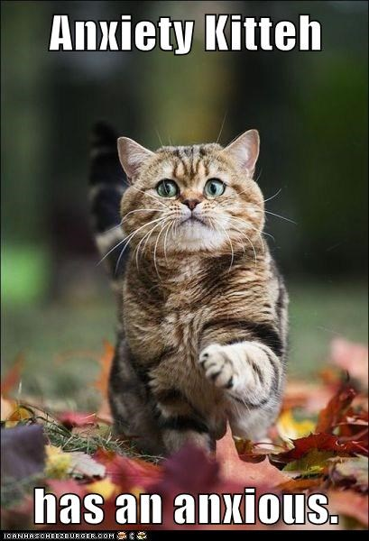 cat outside leaves funny anxiety fall - 7015363328