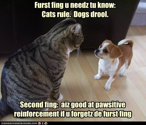 Second fing: aiz good at pawsitive reinforcement if u forgetz de furst fing Furst fing u needz tu know: Cats rule. Dogs drool.