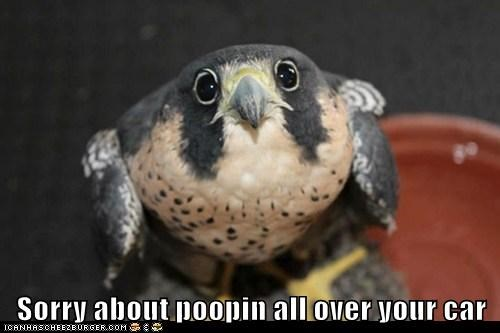 car hawks sorry pooping - 7015771136