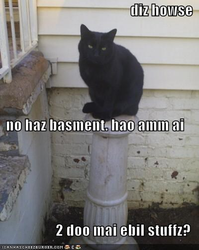 basement basement cat ebil evil lolcats - 701594880