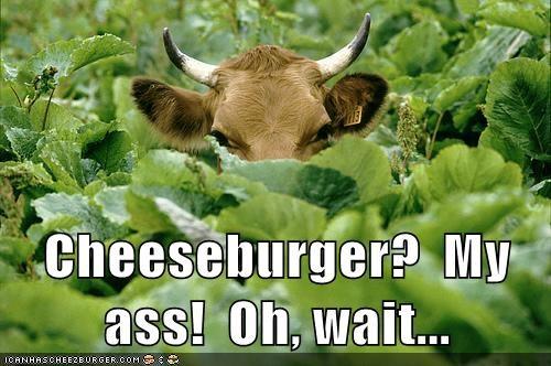 Cheezburger Image 7015975680