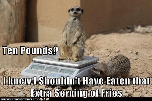 fat,scale,weight,Meerkats,fries