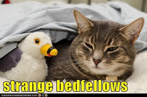 Cheezburger Image 7016196352