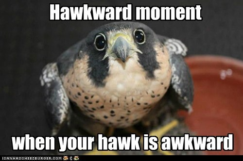 Awkward Moment hawks hawkward - 7016216576