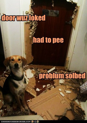 door,dogs,destroyed,pee,potty trained,what breed,mess