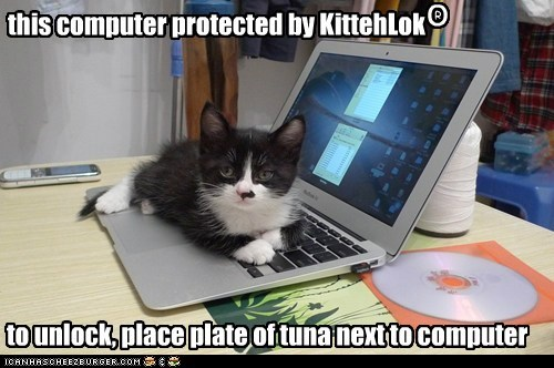 cat tuna security kitten computer kitty funny - 7016276736