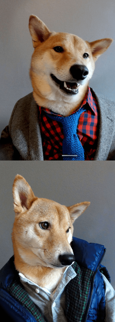 dogs fashion menswear model style clothing shiba inu