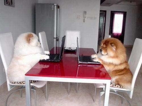 laptops dogs i have no idea what im doing - 7016479744