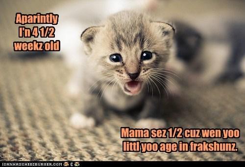 Aparintly I'n 4 1/2 weekz old Mama sez 1/2 cuz wen yoo littl yoo age in frakshunz.
