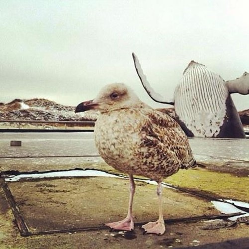 whale,ocean,seagull