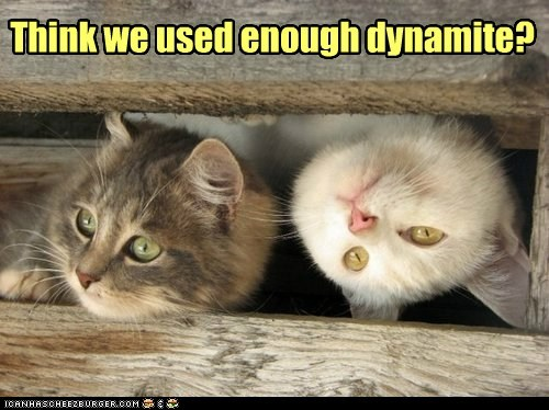 cat explosion dynamite - 7016700160