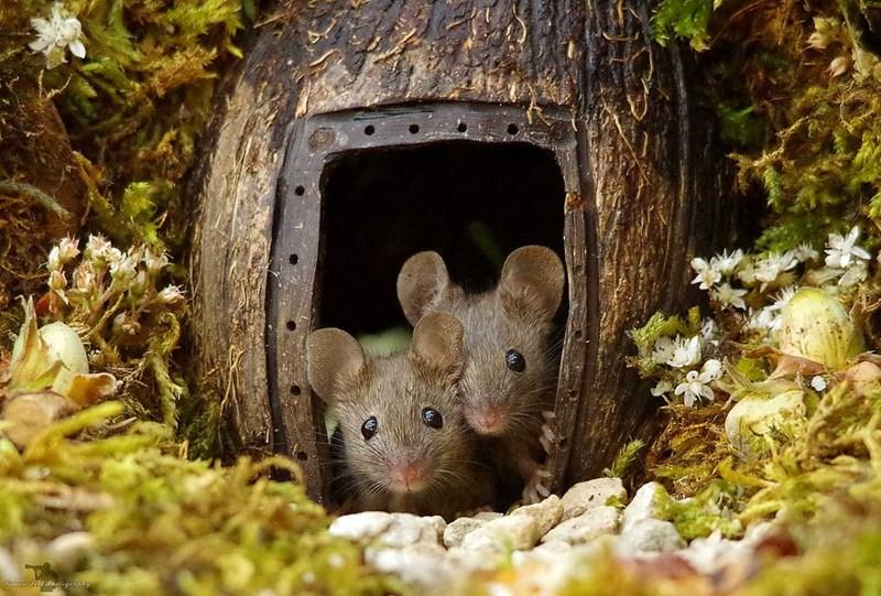 mice home