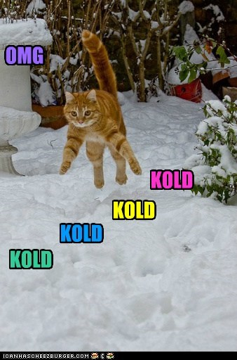 cat jump snow outside funny - 7016835328