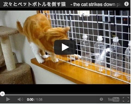cat people pets funny Video - 7016841728