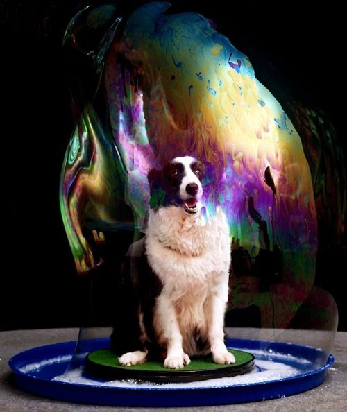 soap bubble dogs - 7016870400