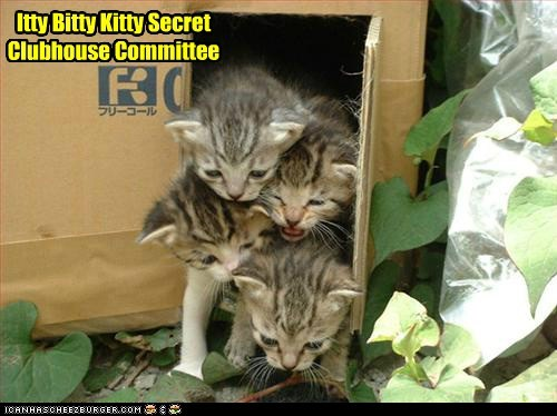 Itty Bitty Kitty Secret Clubhouse Committee