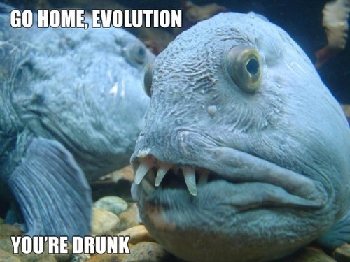 fish evolution scary weird teeth go home your drunk