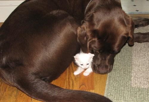 Cats dogs kitten friends interspecies goggies r owr friends - 7016929280