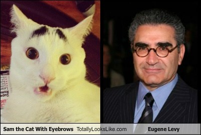 cat,Eugene Levy,eyebrows,Sam,TLL,sam the cat with eyebrows