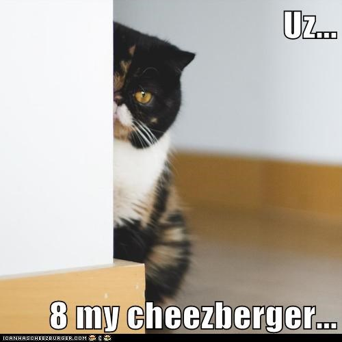 Cheezburger Image 7017157888