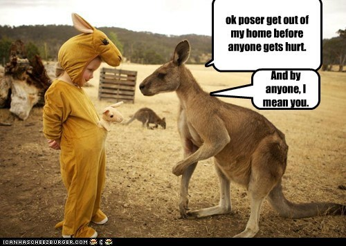 hurt,costume,kids,poser,kangaroos