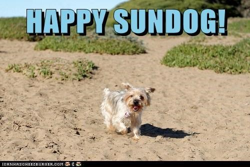 frolicking dogs happy sundog beach sand Sundog what breed - 7017309184