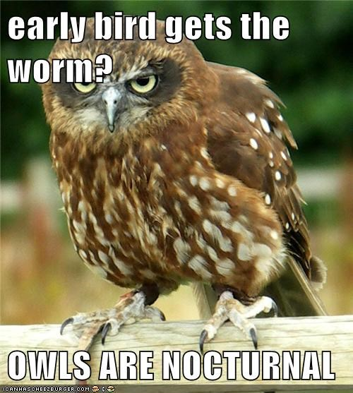 nocturnal,idiom,owls,not impressed