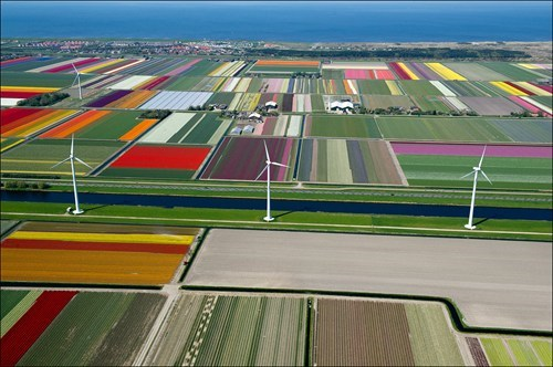 windmills tulips landscape pretty colors - 7017714944