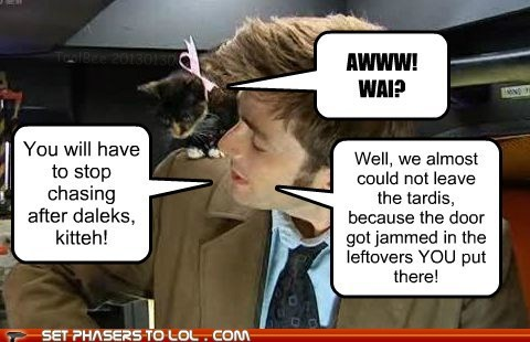 kitteh leftovers Exterminate chasing daleks doctor who Cats