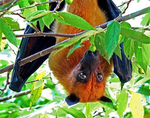 wings bats creepicute squee bat - 7017783040