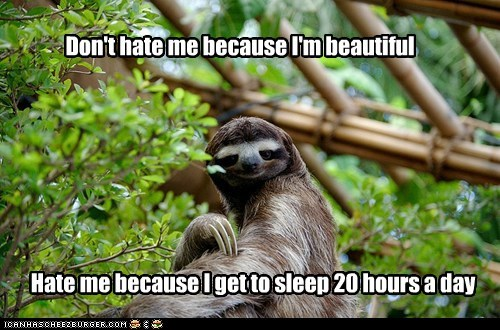 jealous sloths hating sleeping