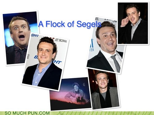 surname,flock of seagulls,similar sounding,homophone,jason segel