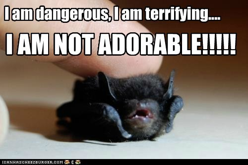 I am dangerous, I am terrifying.... I AM NOT ADORABLE!!!!!