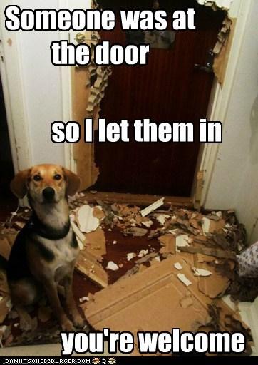 door destroyed what breed mess - 7019332096