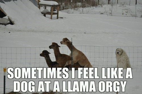 that feeling,orgy,llamas,dogs,dating fails