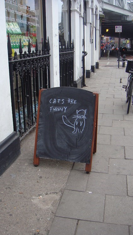 sign restaurant board Cats write funny