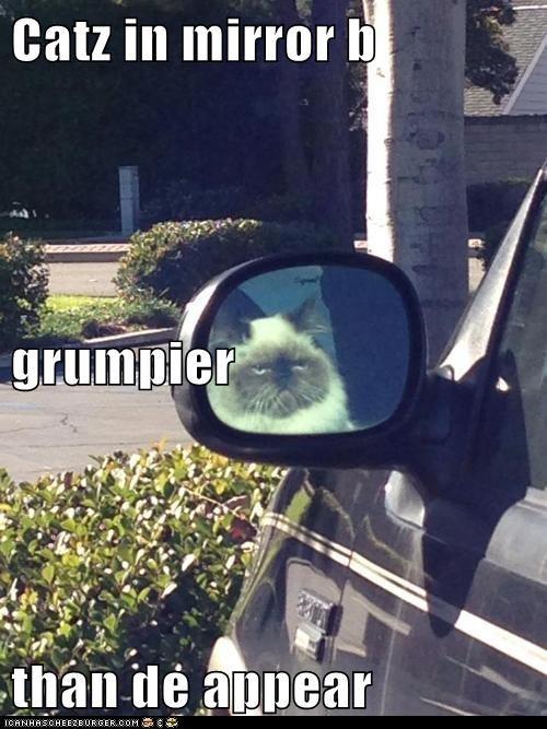 cat drive car grump grumpy funny - 7019767040