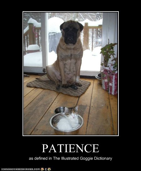 PATIENCE as defined in The Illustrated Goggie Dictionary