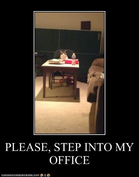 cat,work,Office,demotivational,business,funny